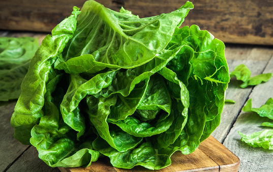 image of the plant Lettuce