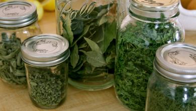 preserved herbs in jars